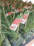 PLANTS LEGUMES ET FLEURS SANS POT
