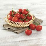 TOMATE COCKTAIL GRAPPE